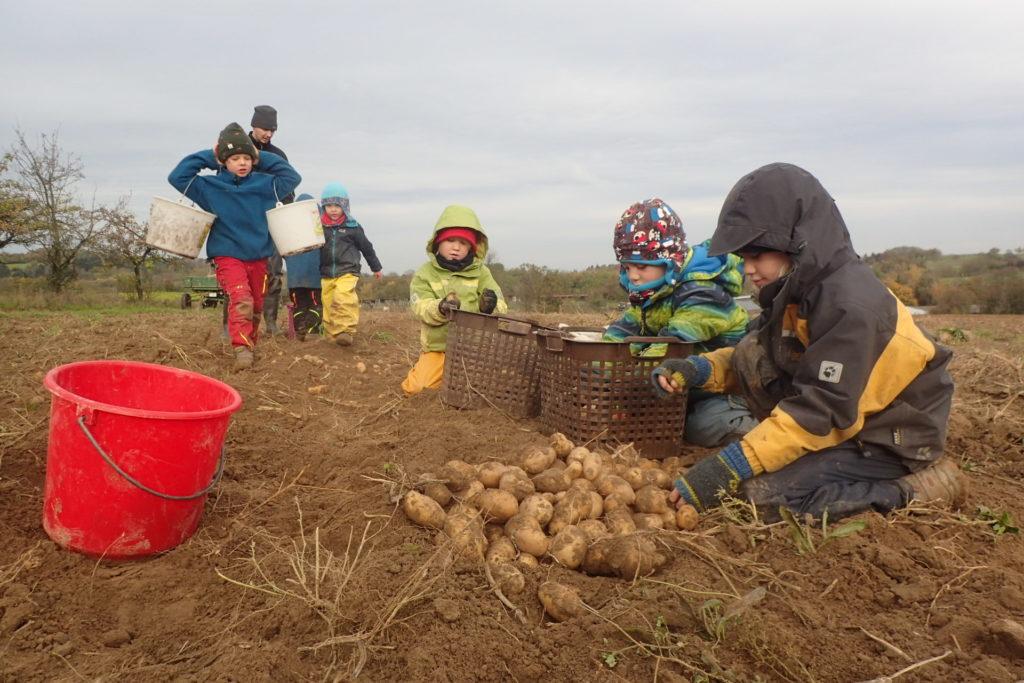 Fleißige Helfer bei der Ernte